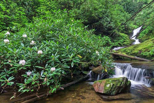 Lower Laurel Fork Falls - Pisgah National Forest