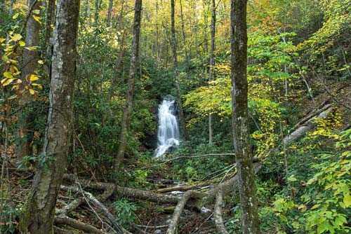 Log Hollow Falls - Pisgah National Forest